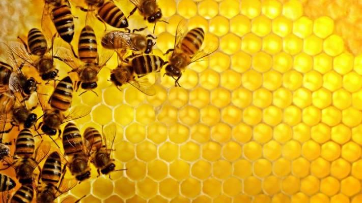 quy trình sản xuất sữa ong chúa