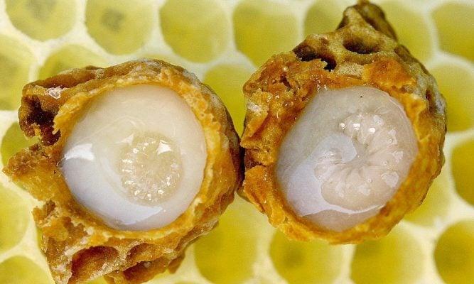 Viên sữa ong chúa Royal Jelly 1000mgViên sữa ong chúa Royal Jelly 1000mg